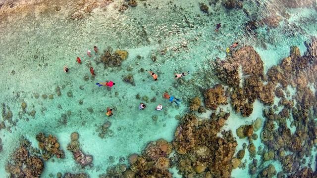 Jardin de corail dans le lagon de Taha'a – Polynésie Française