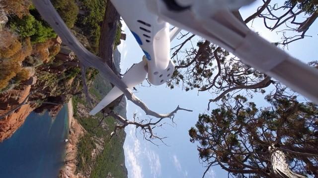 Crash in TheTree of Corsica
