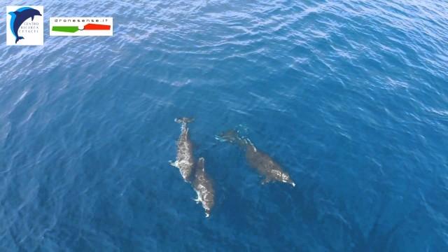 delfini con droni