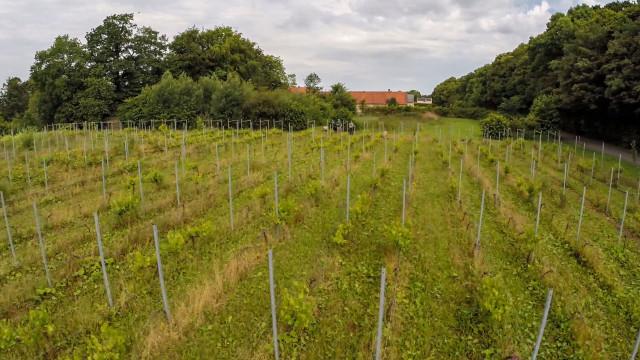 Winemaker Niels Gabriel, Tølløse, Denmark