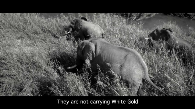 Wildlife Tragedy, SA