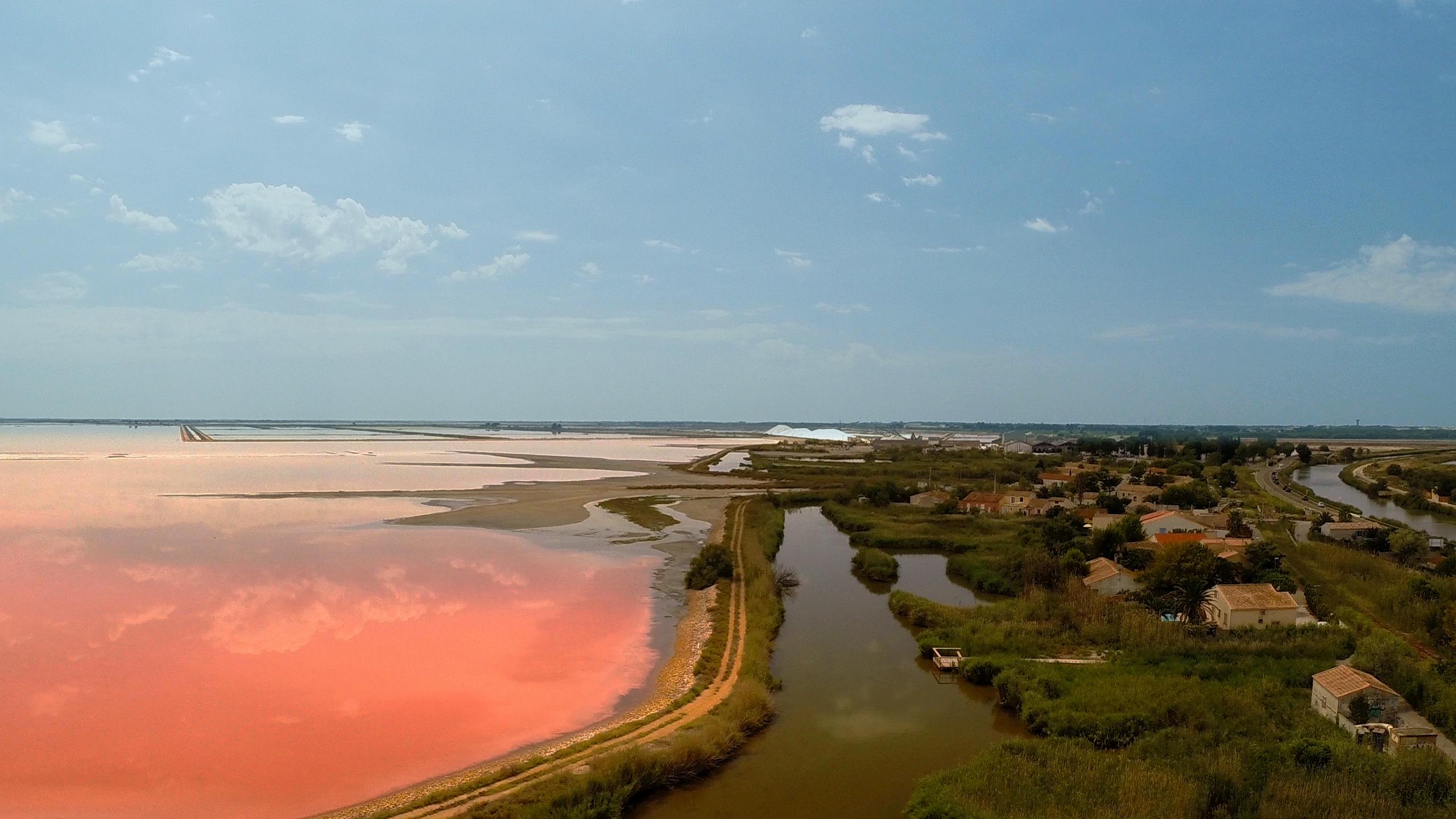Camargues, Aigues mortes, France