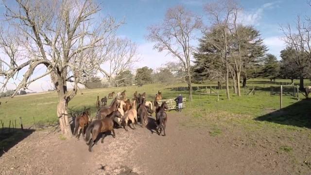 Farm and horses