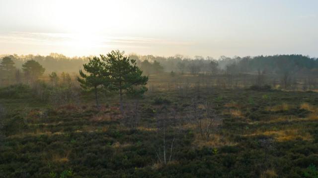 Sunrise at Knaphil, Surrey