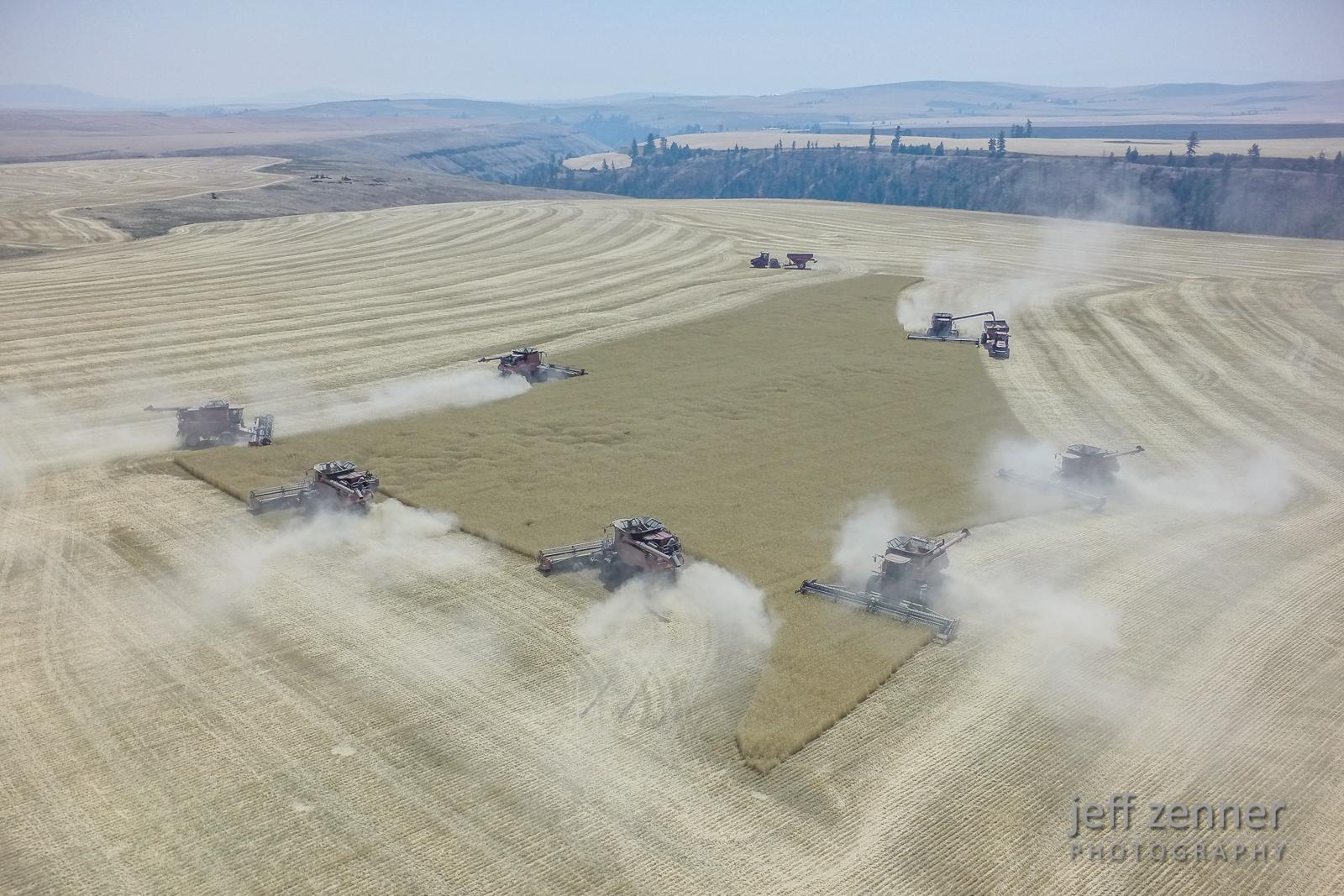 Wheat Harvest x 7!
