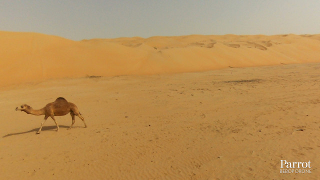 desert, Abu Dhabi, Emirates