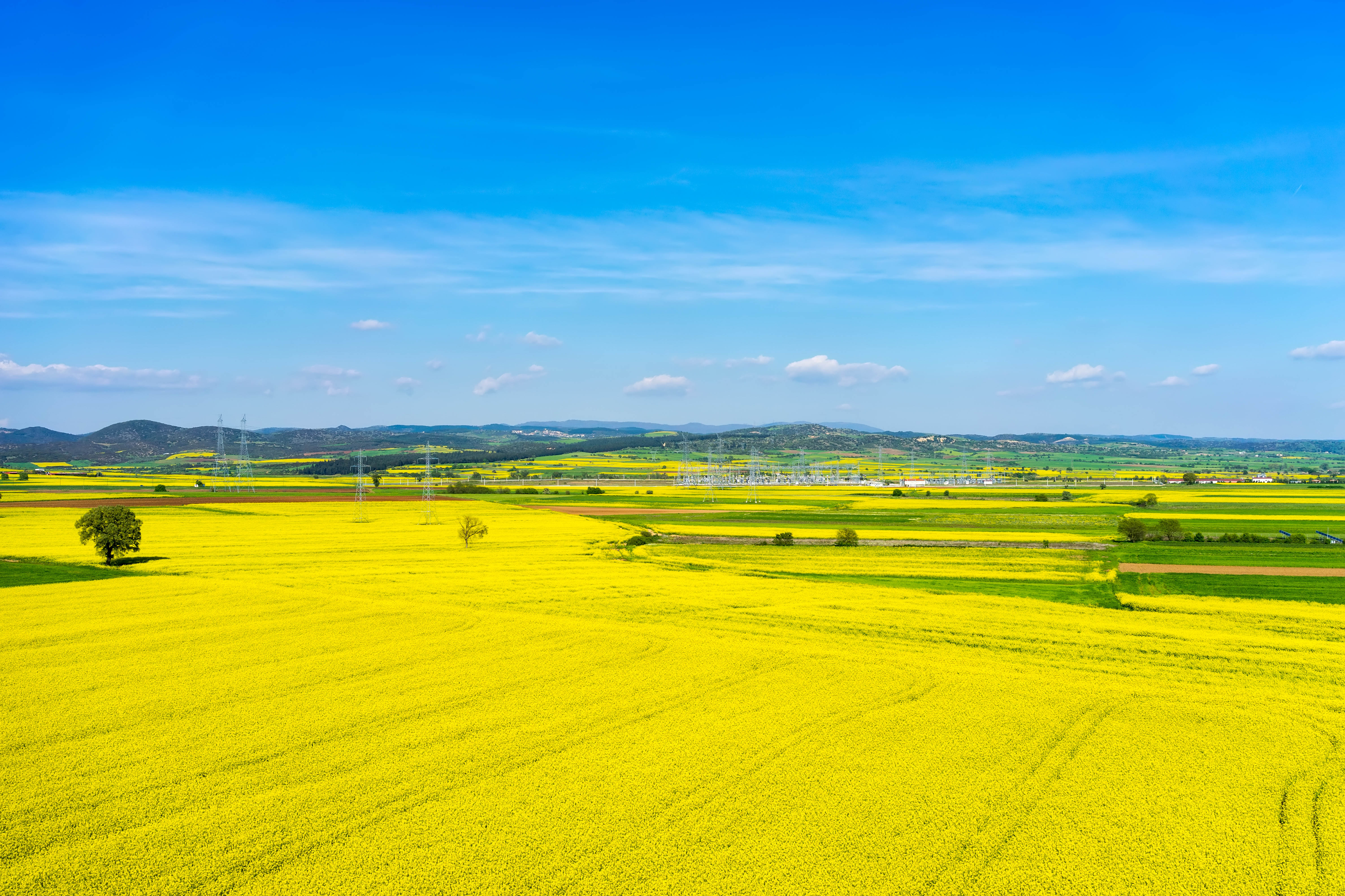 Rape canola flower rapeseed isolated fuel yellow oil aerial view rural landscape with blooming rape at the north greece mightylinksfo