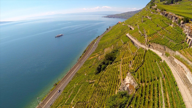 Lavaux, Rivaz, Vaud, Switzerland