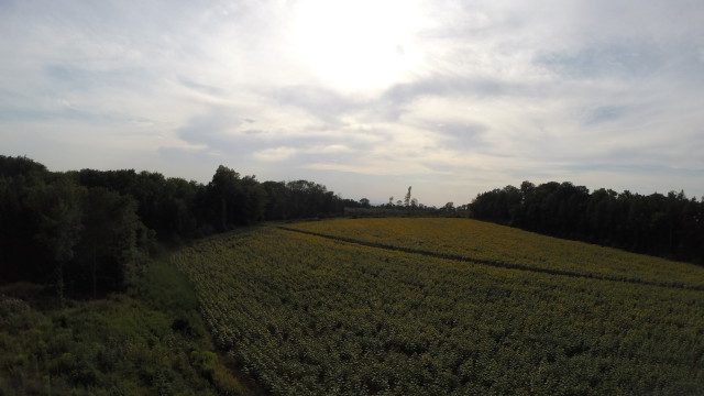 Austria, Wiener Wald somewhere