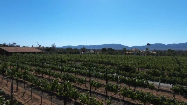 Lechuza Vineyard, Ensenada
