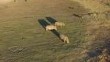 Rhinos at sunset
