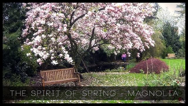 The Spirit of Spring in Germany – Magnolia