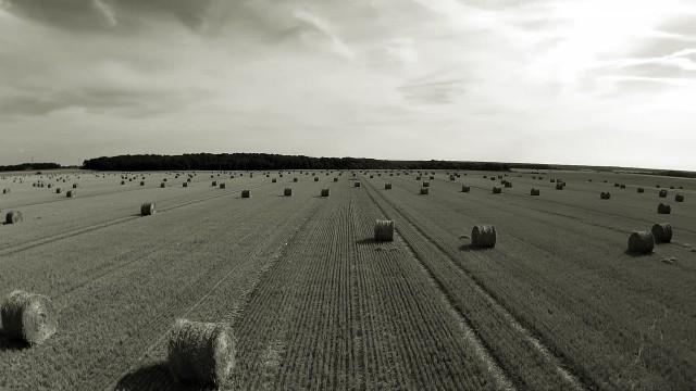 Field in Bois Anzeray 27330  Upper Normandy France