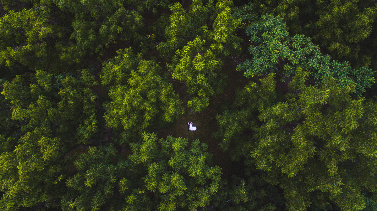 Wedding Couple Through The Trees