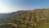 Olive grove in the mountains of Cretre