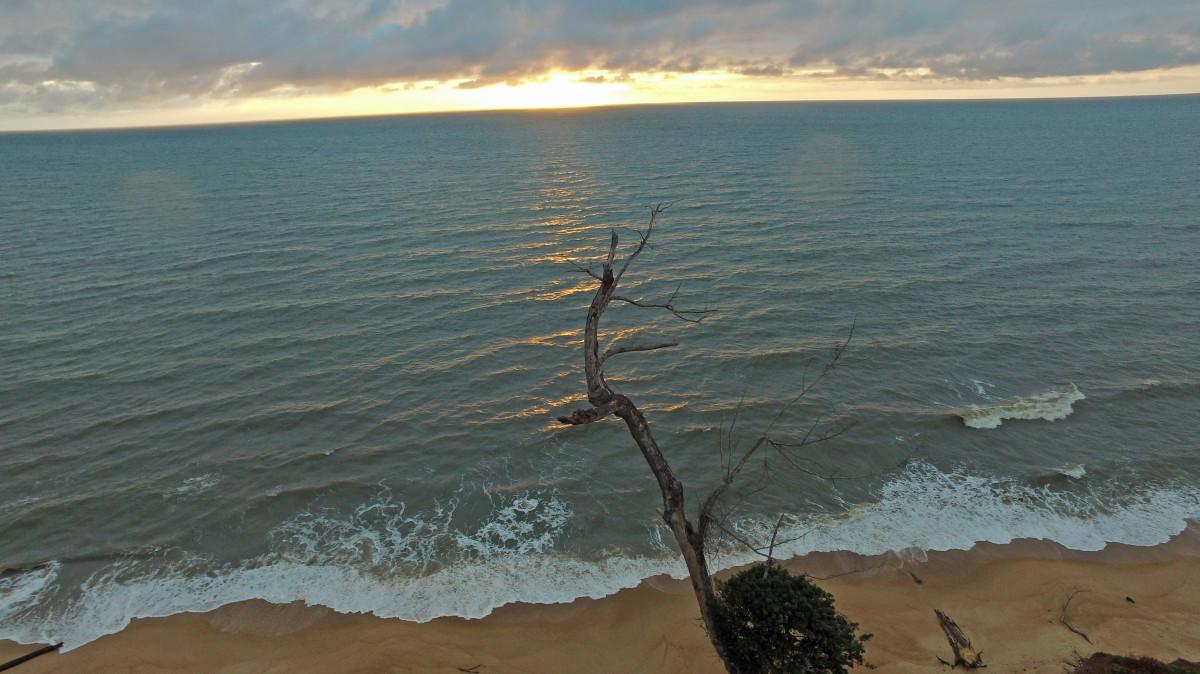 Tree on Beach of Gabon