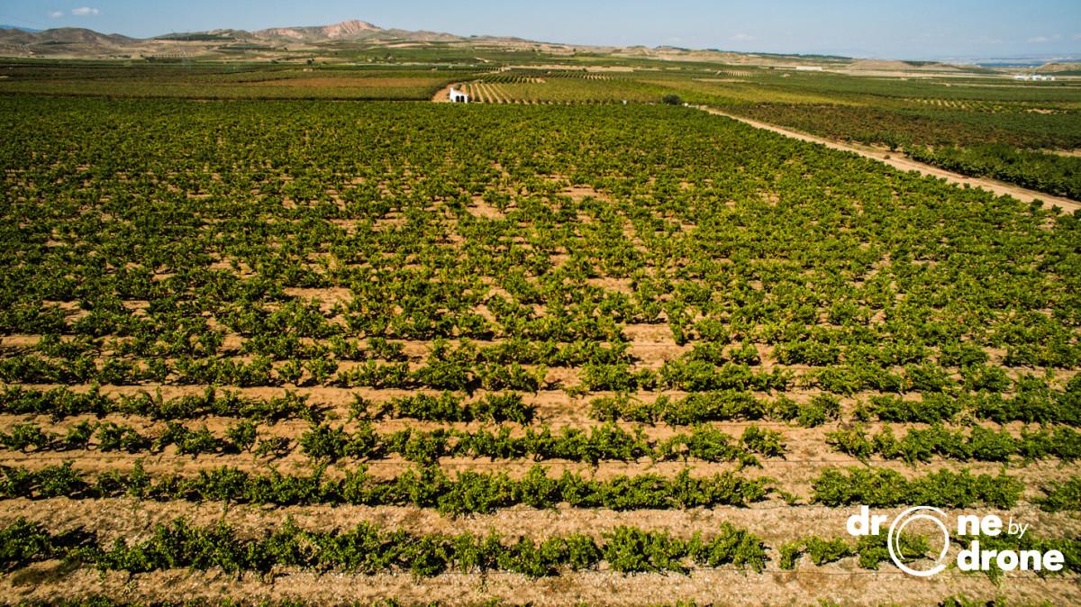 Bodegas Real Rubio, Aldeanueva de Ebro, La Rioja
