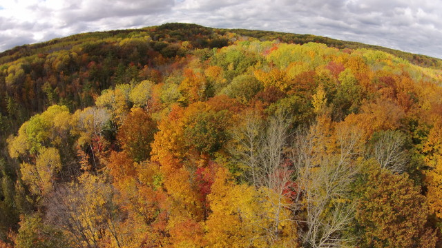 Huron National Forest