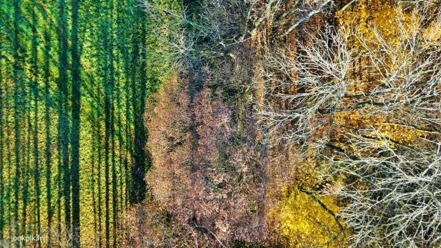 La foret d'automne, prises de vues aeriennes par drone, Poitou-Charentes, France