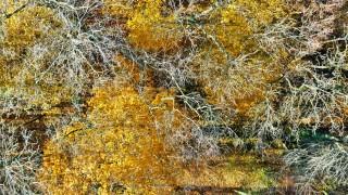 La foret d'automne, prises de vues aeriennes par drone, Pays de la Loire, France