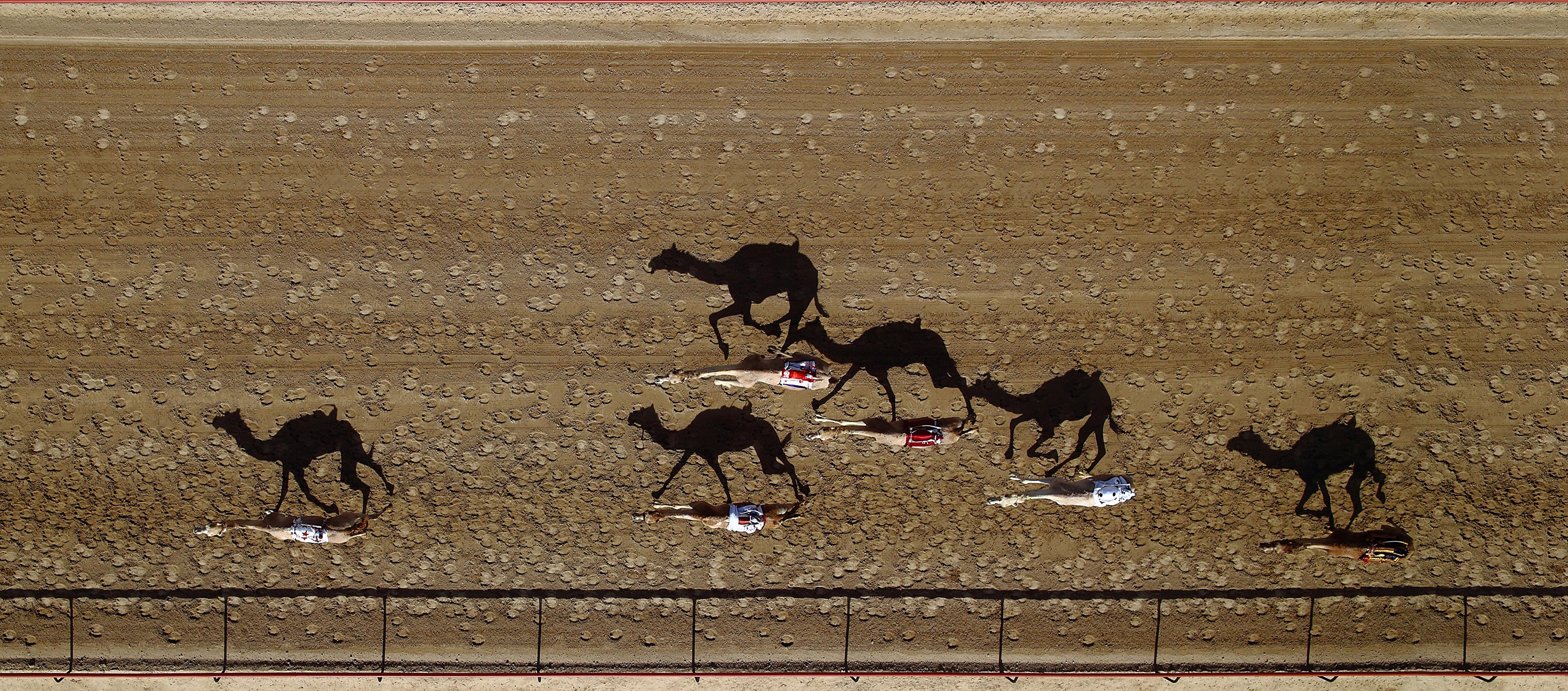 Al Marmoum Race Track, Dubai, UAE