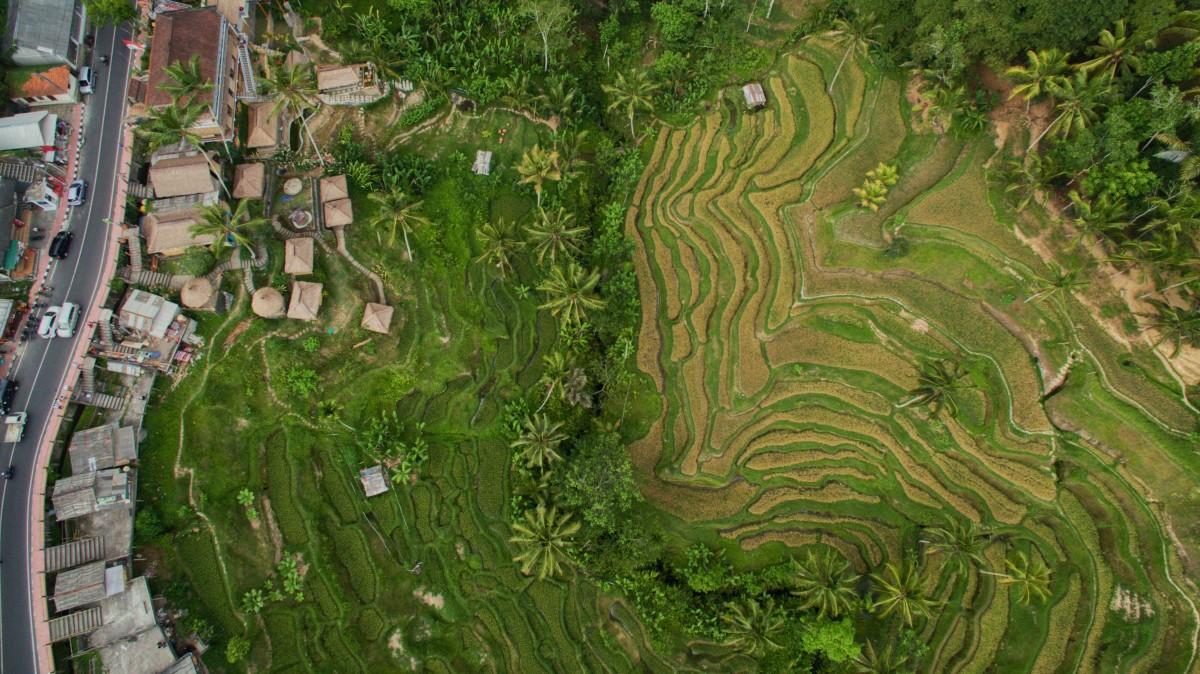 Ceking Tegalalang Bali