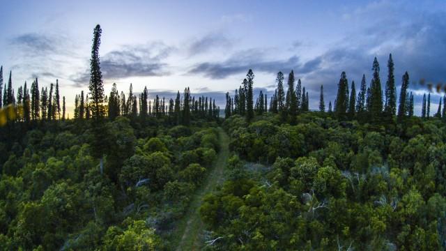 Cap des Pins, tribu de Joj, Lifou, Nouvelle-Calédonie