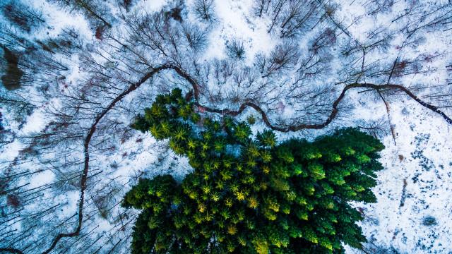 Kalbyris forest Denmark