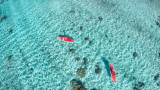 Paddle in coral garden, Tahaa island, French Polynesia