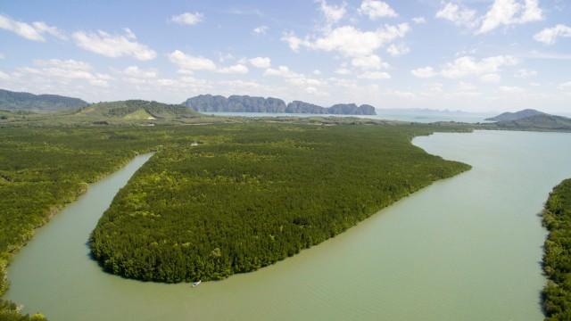 Mangrove forest – Thailand
