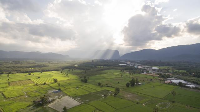Ricefield Nakhon