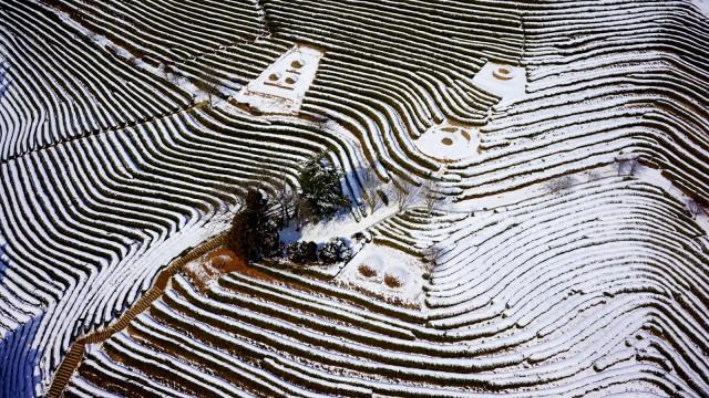 KOREA Greentea Farm