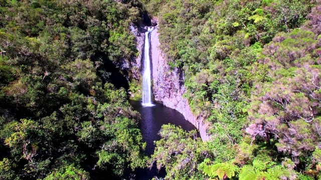 La Réunion Forêt de Bébour