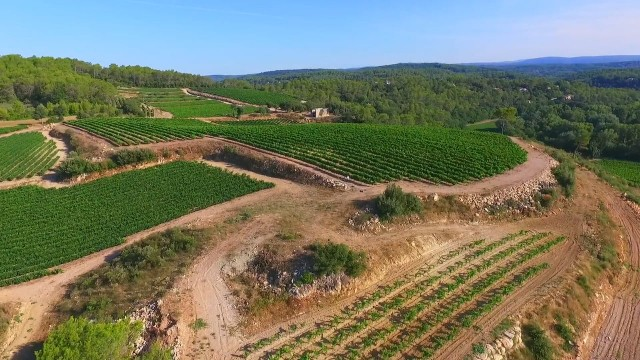 Vignes, Vineyard @ France, Var (83), Le Thoronet