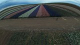 Lack Road Flower Fields