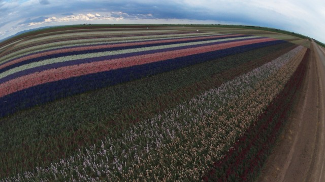 Lack Road Flower Fields