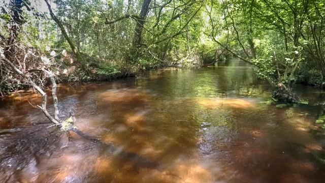 The palue brook of Leon Moors, France.