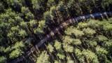 way through an empty forest…, Salo, Finland