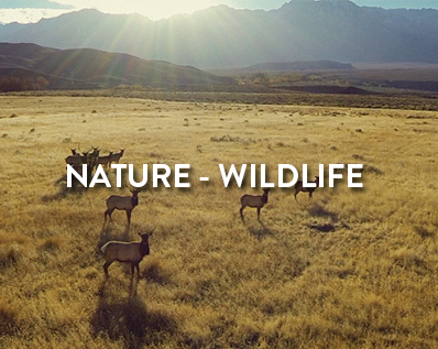 category nature wildlife