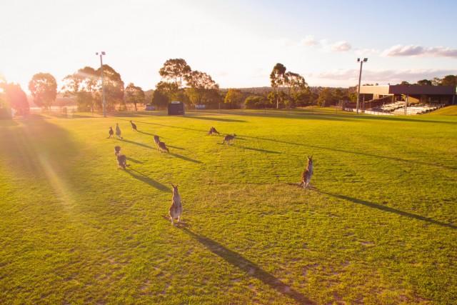 Dandenong City Soccer Club, Endeavour Hills, Victoria, Australia