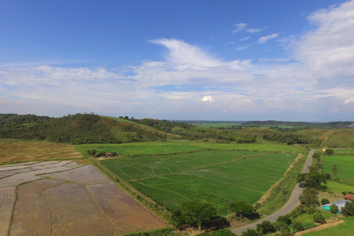 Cultivos de arroz, vereda La Bertha – Jamundí, Valle del Cauca