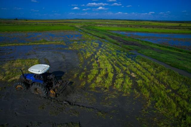 Mwea Irrigation Scheme