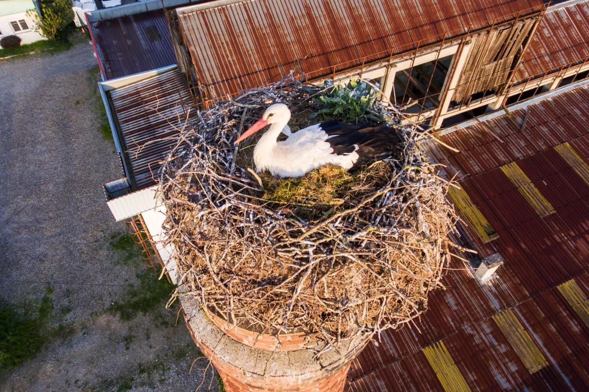 Storck nest in Habsheim