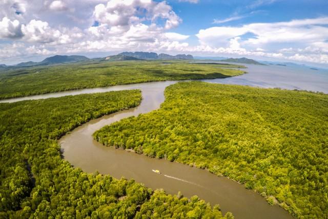 Mangrove, Ko Lanta, Thaialnd