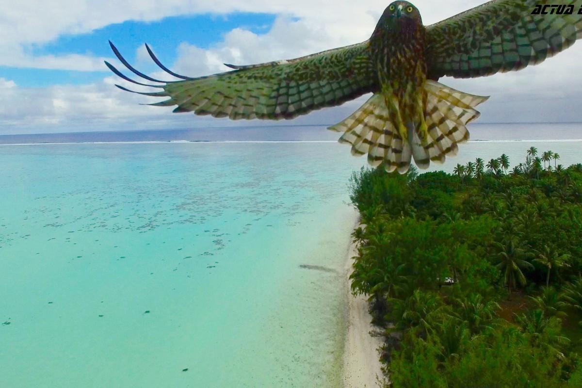 Пташиний напад у Французькій Полінезії, Actua Drone