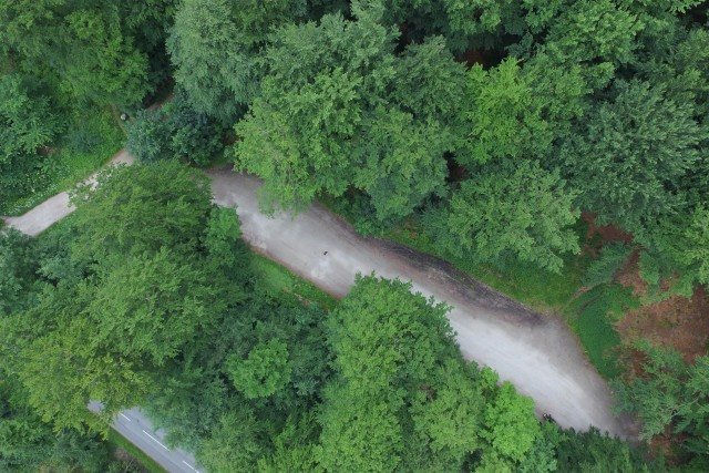 TopView of the forrest in Hareskovby Denmark