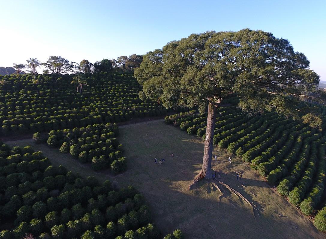 Botelhos Minas Gerais fonte: www.dronestagr.am