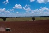Mahalitc Corn Field