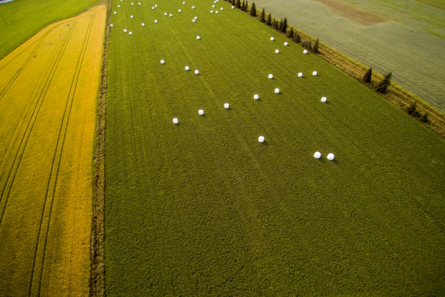 Dragon eggs in the fields, Salo, Finland