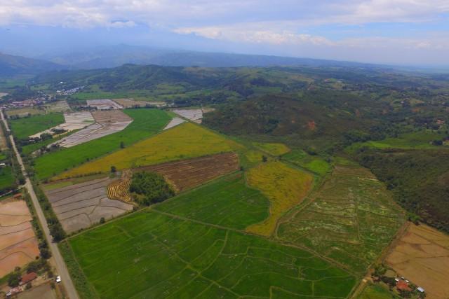 The Color Rice/ El Color del Arroz. Jamundí – Colombia.